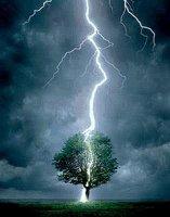 Blitz trifft Baum