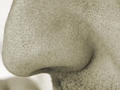 Eine Nase
