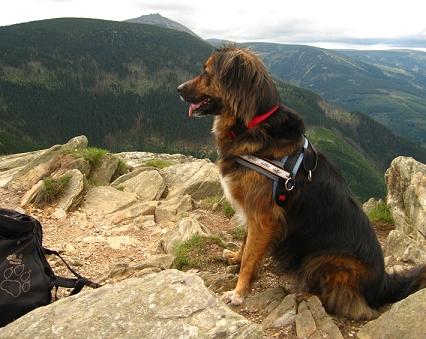 Bild mit Hund und Gipfel